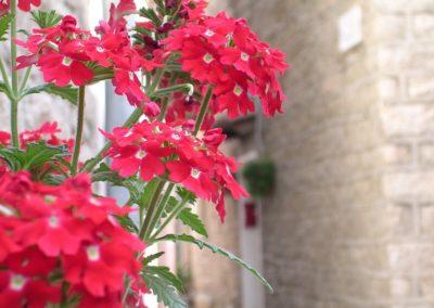 balcone fiorito ad Aggius, Sardegna. Dettaglio